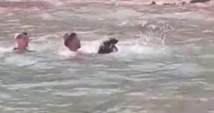 Il video del salvataggio di Turk