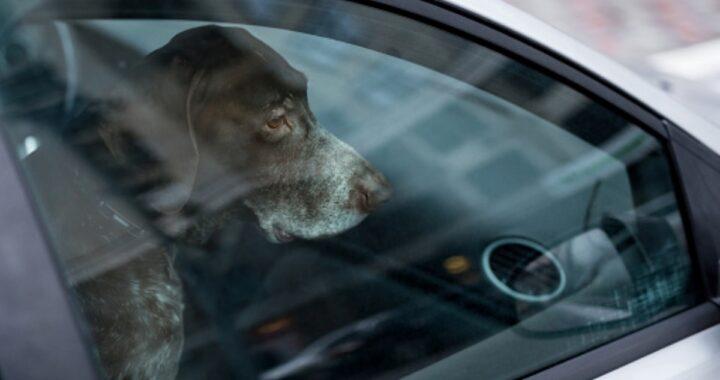 Agrigento, uomo di 50 anni lascia il cane chiuso in macchina per ore: denunciato
