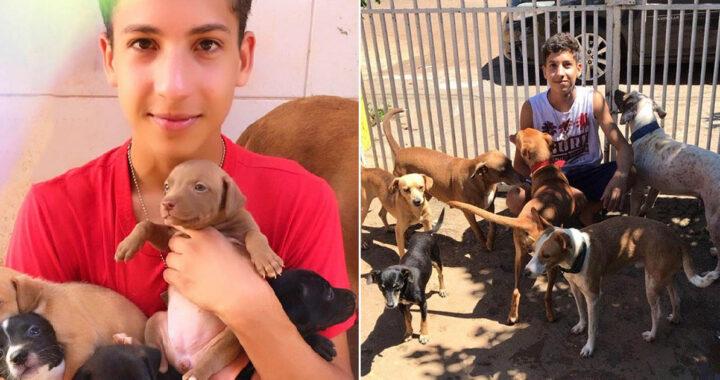 Adolescente apre un rifugio per animali