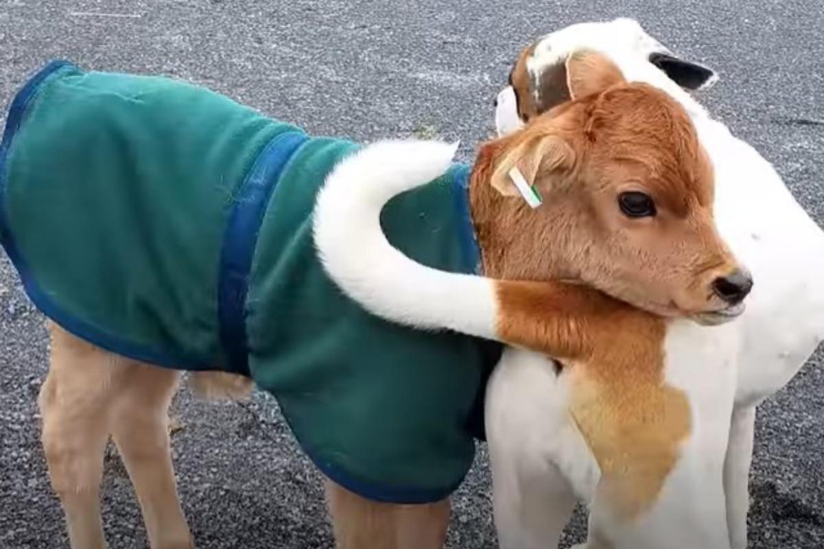 amicizia colton e bucket