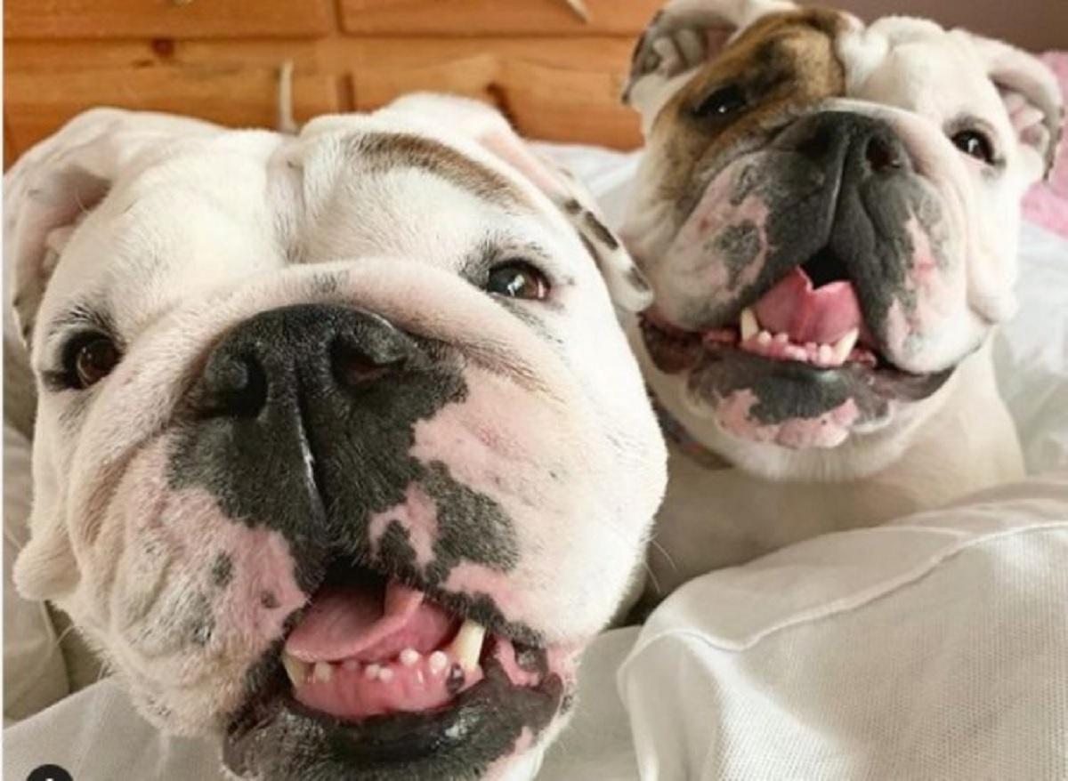 Bulldog presentano la casa high tech