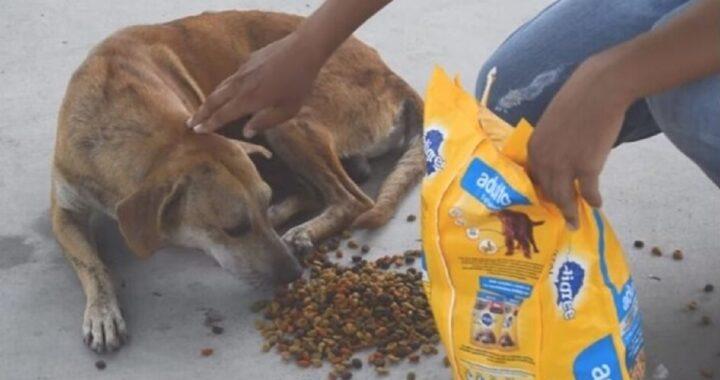 Camionista dà da mangiare ai cani randagi ogni giorno