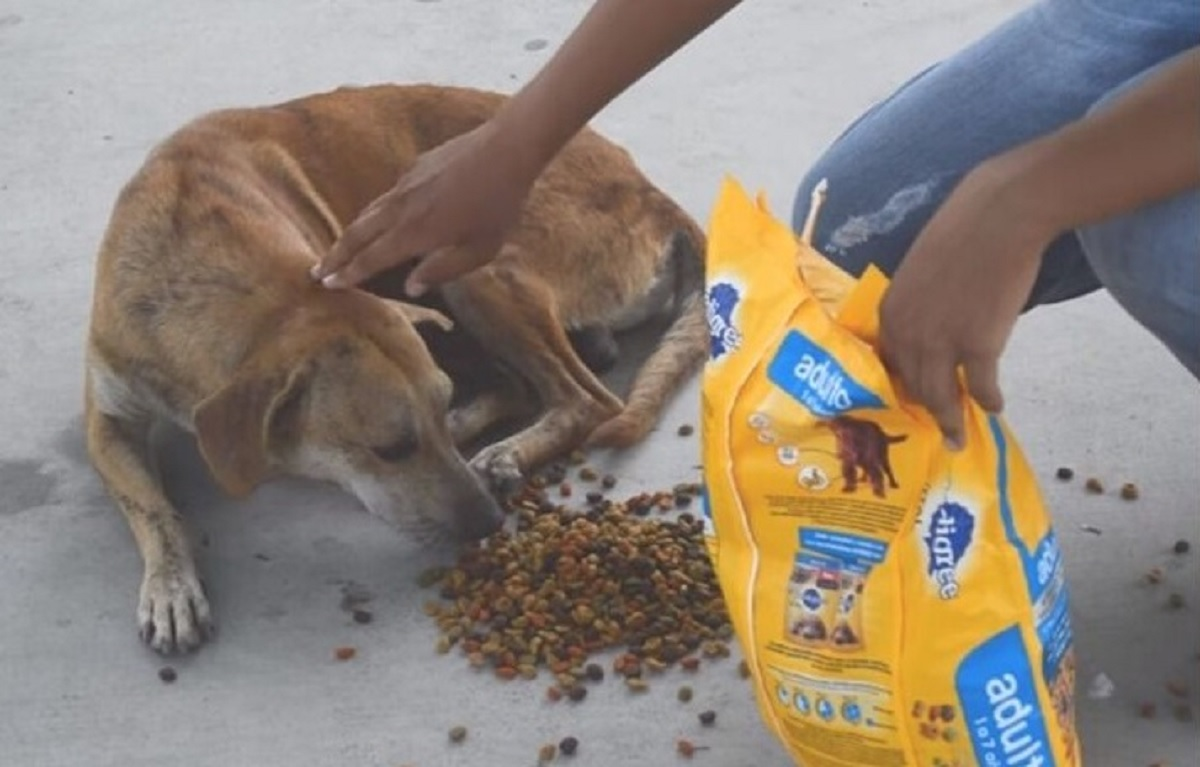 Camionista dà da mangiare ai cani randagi