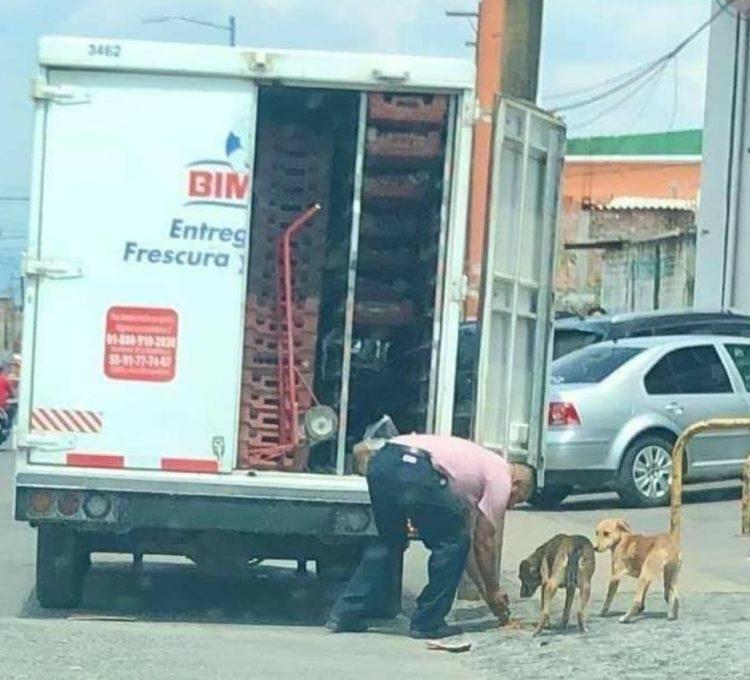 Solidarietà verso i cuccioli di strada