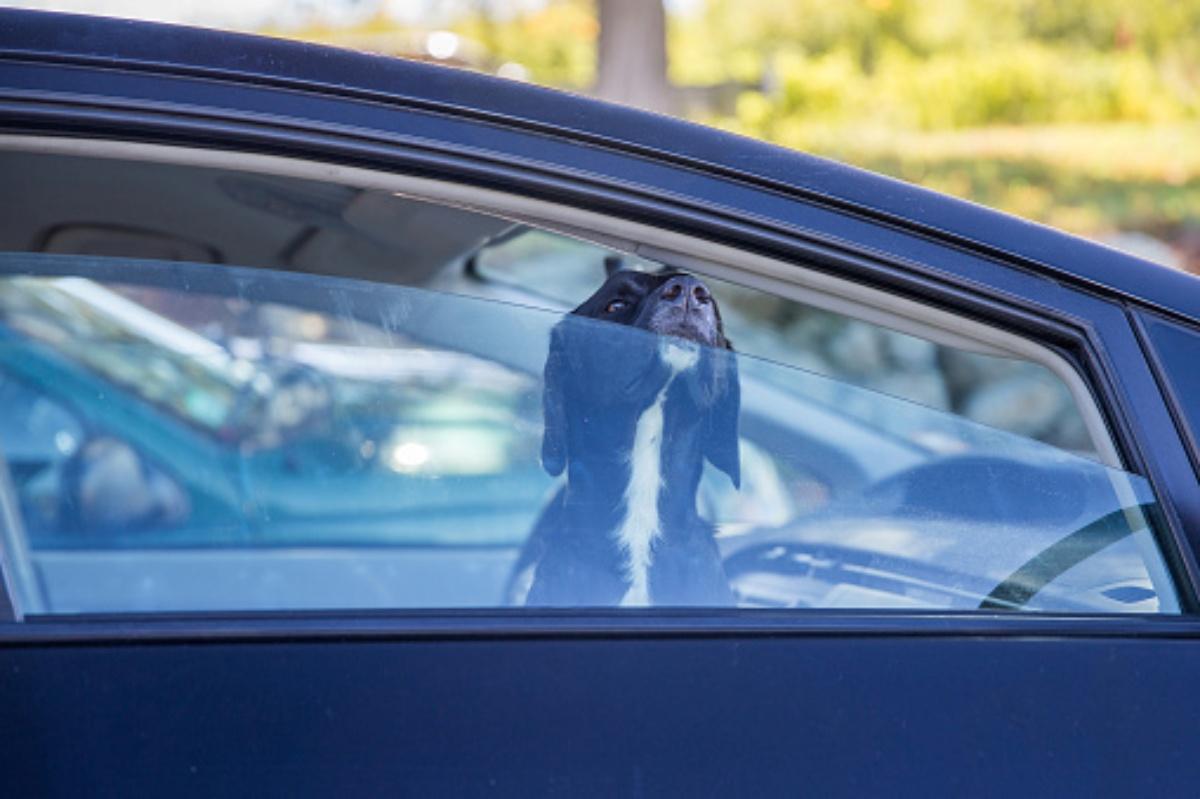 Il salvataggio di un cane in macchina