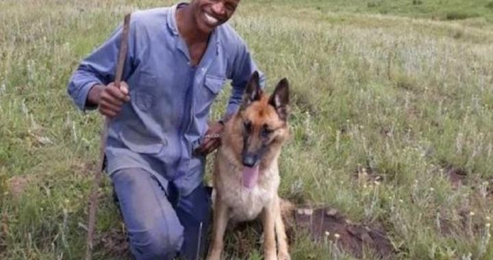 Cane da soccorso ritrova il suo amico umano