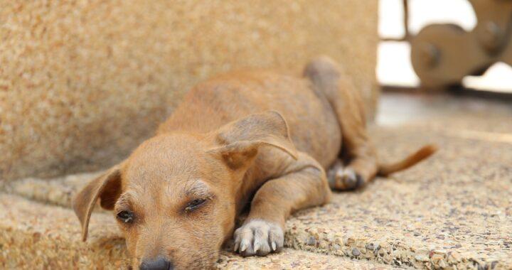 cane disperso salvato dai soccorritori