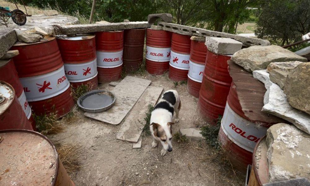 Cane intrappolato da barili