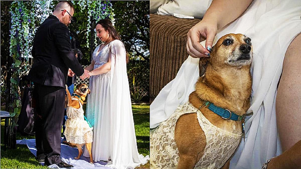 Il cagnolino ruba la scena al matrimonio