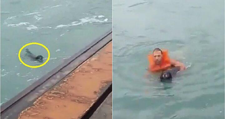 Cane ringrazia con una leccata il marinaio
