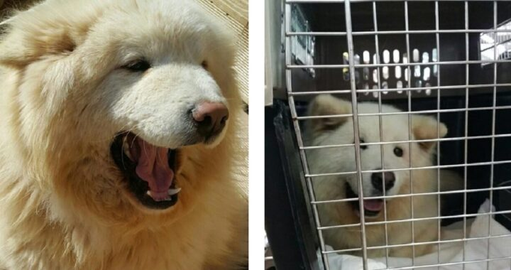 Cane senza pelliccia morente abbandonato al suo destino
