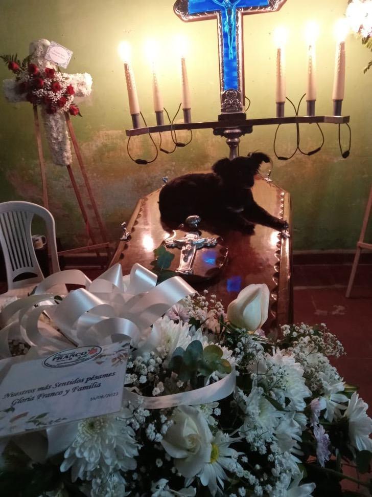 Funerale del padrone del cucciolo