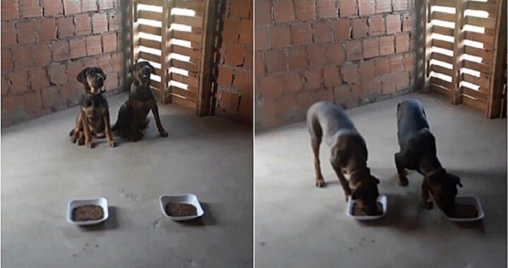 Cani aspettano la preghiera