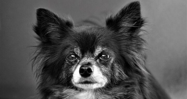 Chi ama di più il cane? Coppia trova un modo per testarlo