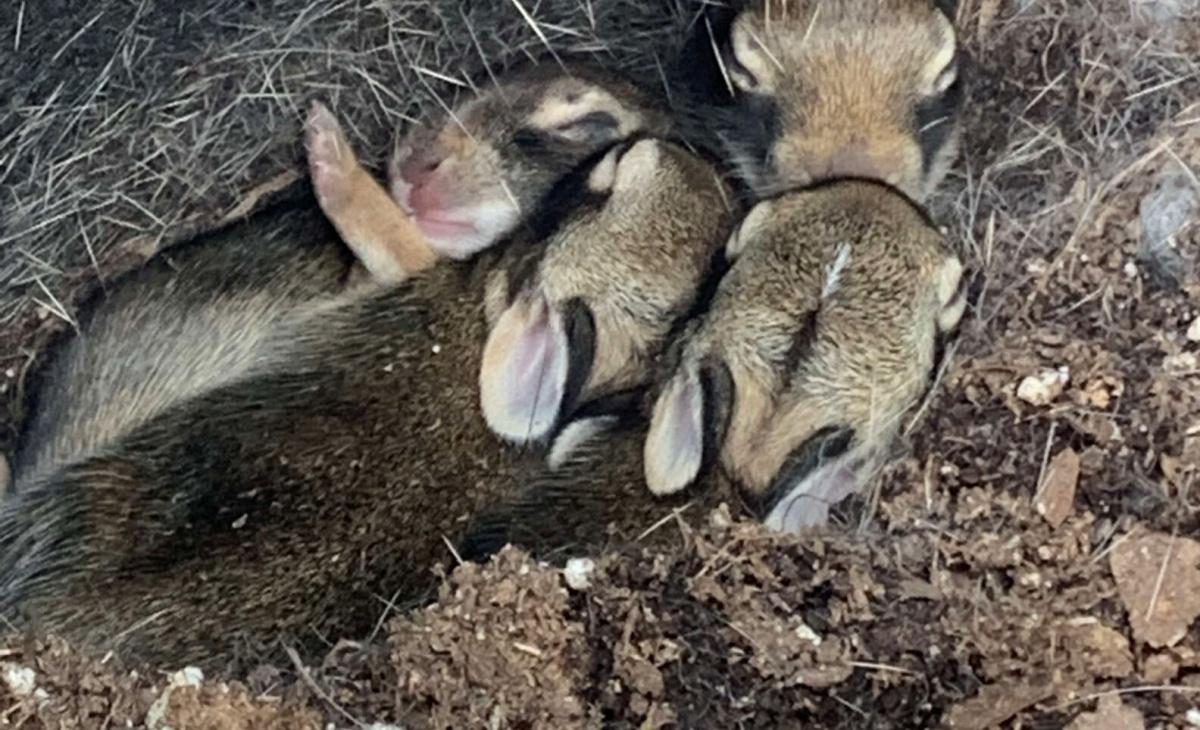 Coniglietti trovati in un vivaio