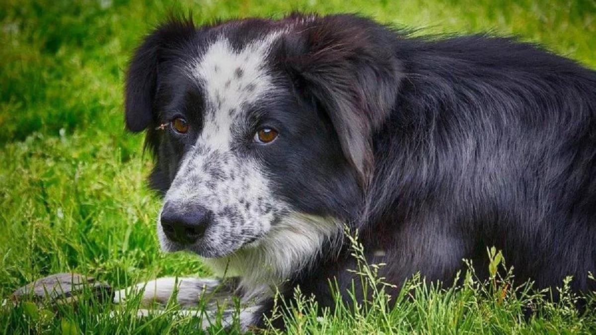 Nerina la cagnolina