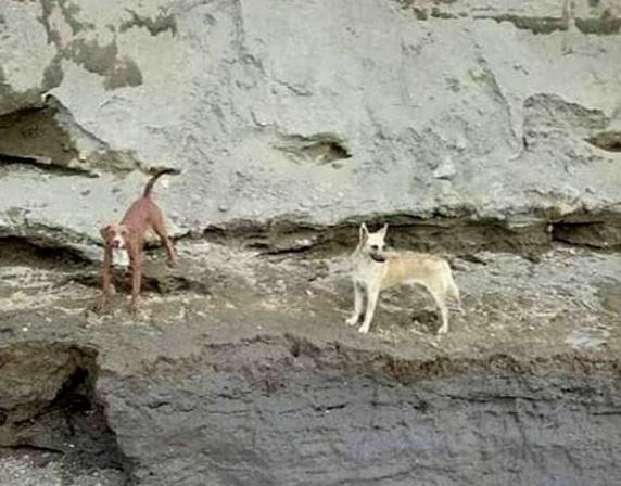 Cani in difficoltà