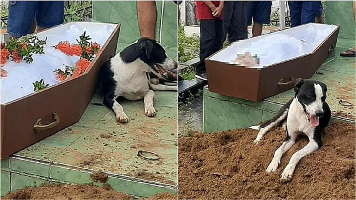Cucciolo non lascia il proprietario morto