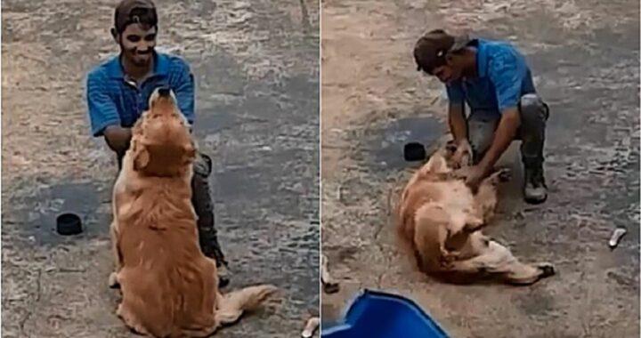Proprietario filma quello che fa un muratore quando vede il suo cane