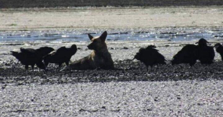 Cucciolo spaventato intrappolato nel fango