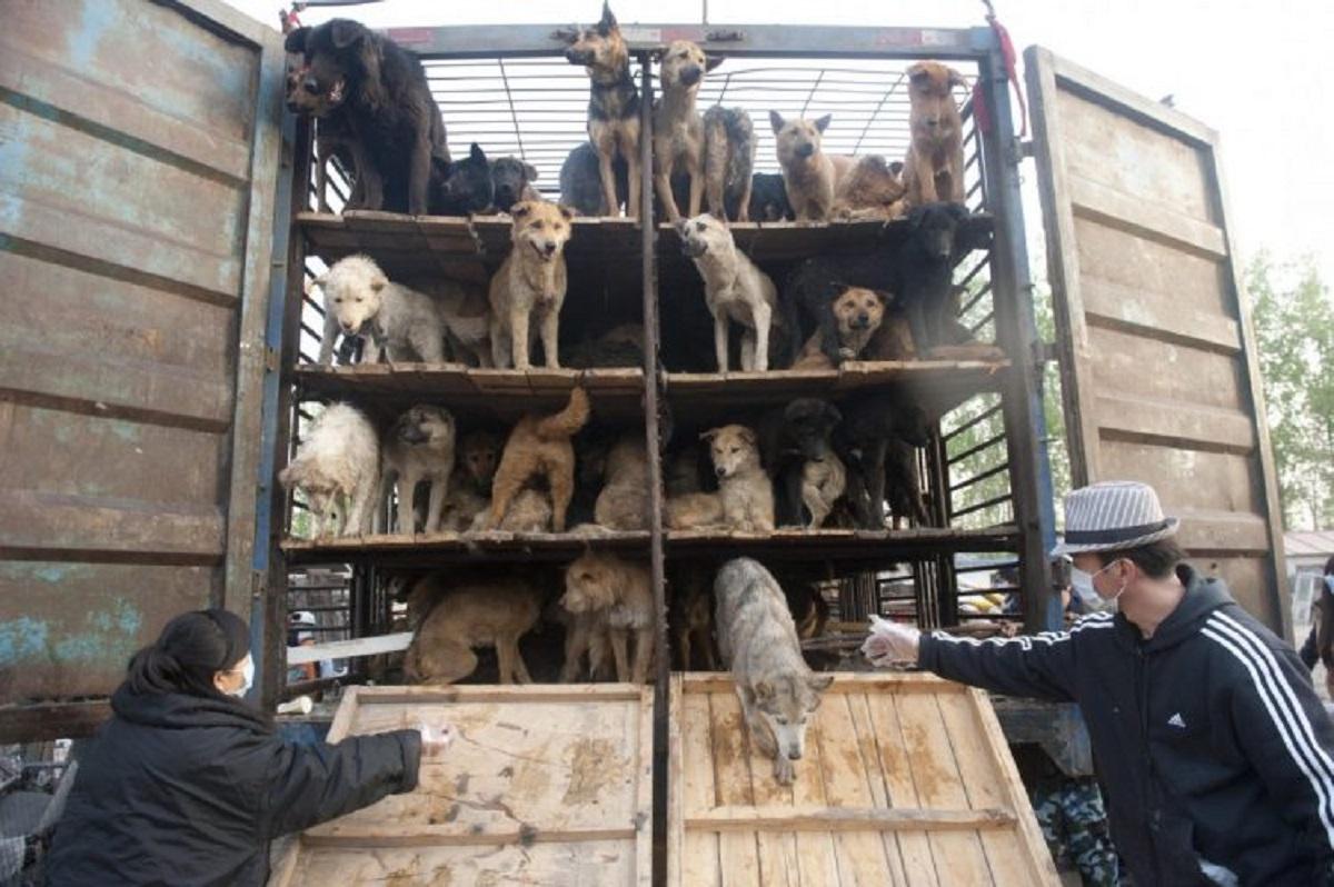 Festival della carne di cane del 2021