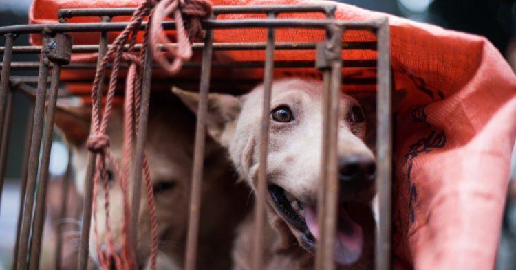 Cuccioli salvati dalla morte