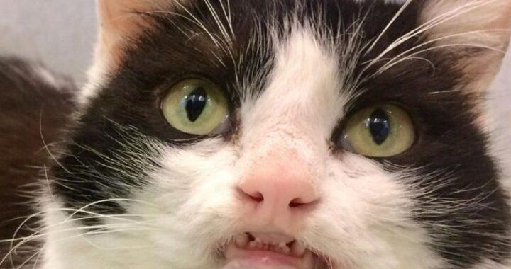 Gattina sorride a chi entra nel rifugio sperando che qualcuno la adotti