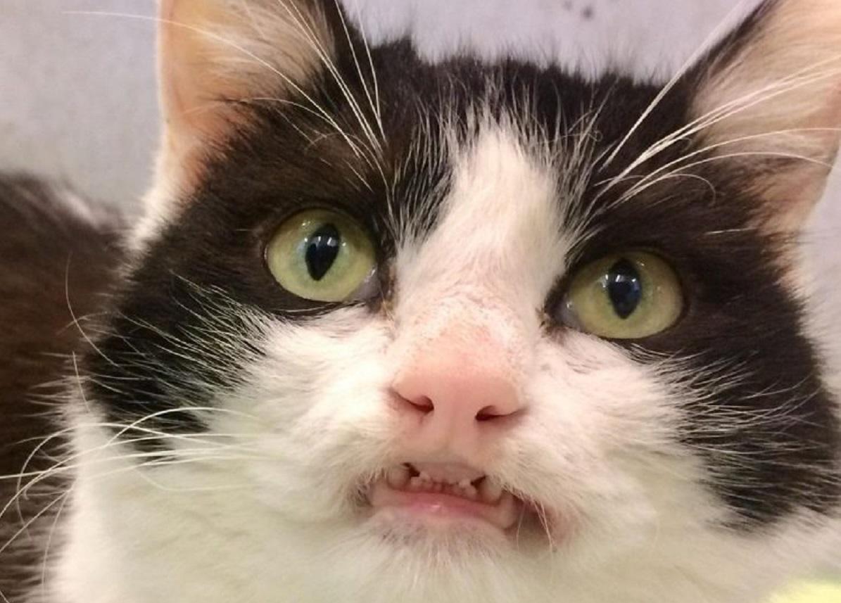 Gattina sorride a chi entra nel rifugio