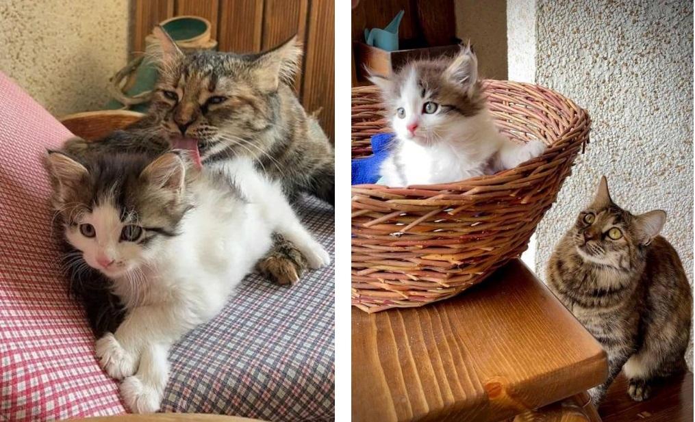 Gattina voleva una sorella