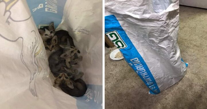 Gattini abbandonati in un sacco