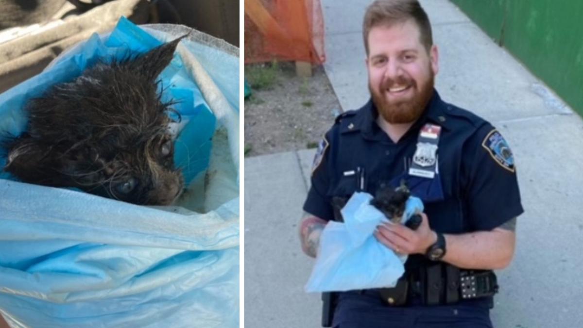 Gattino salvato da un poliziotto