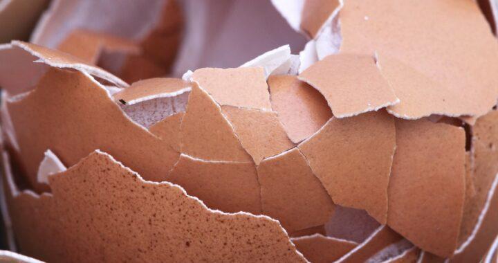 Gatto rompe 18 uova in un istante: come ha fatto? Il video mostra l'attimo esatto in qui si consuma il disastro