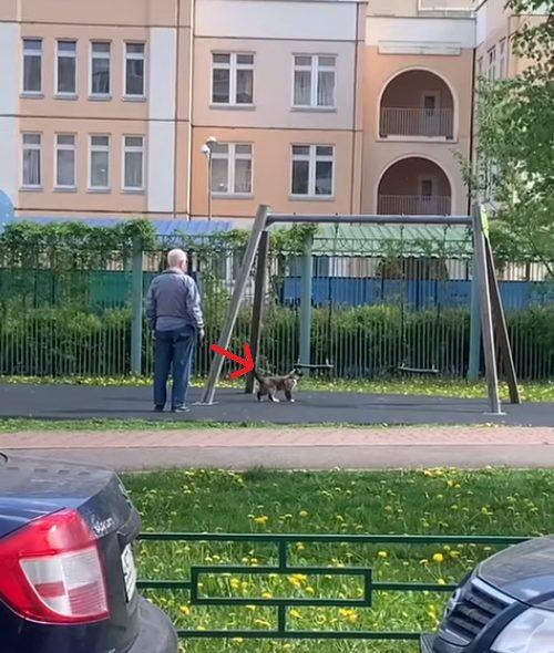Anziano spinge il micio