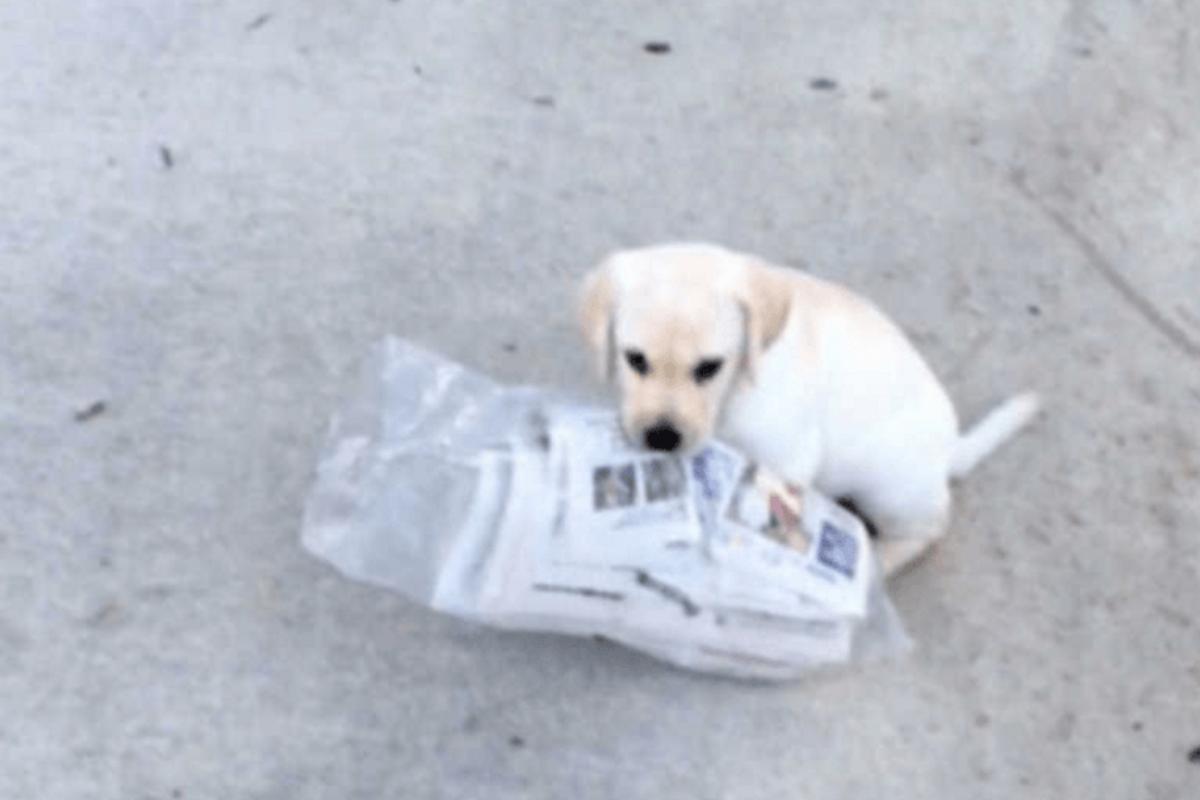 gracie giornale