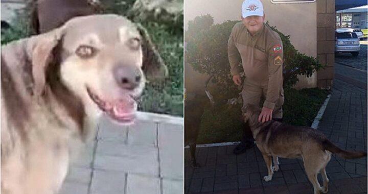 cane della comunità