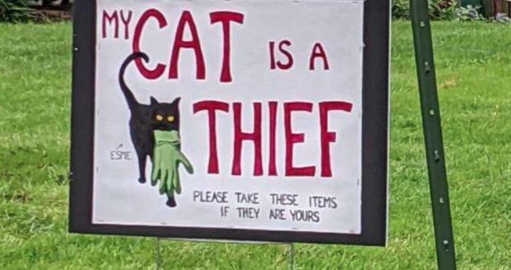Il gatto ladro costringe la famiglia a correre ai ripari dopo i suoi atti criminali
