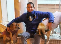 angelo custode dei cani randagi