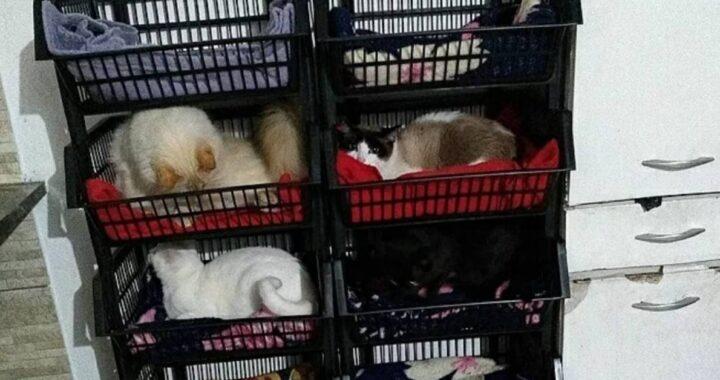 Letto a castello per gatti con i cestini della frutta