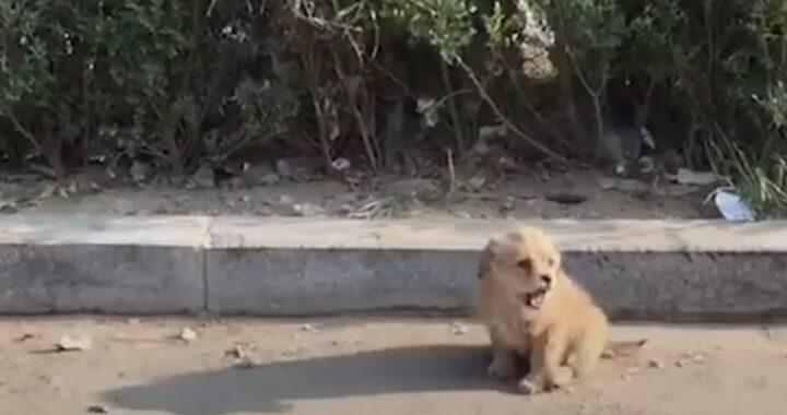 lion salvataggio