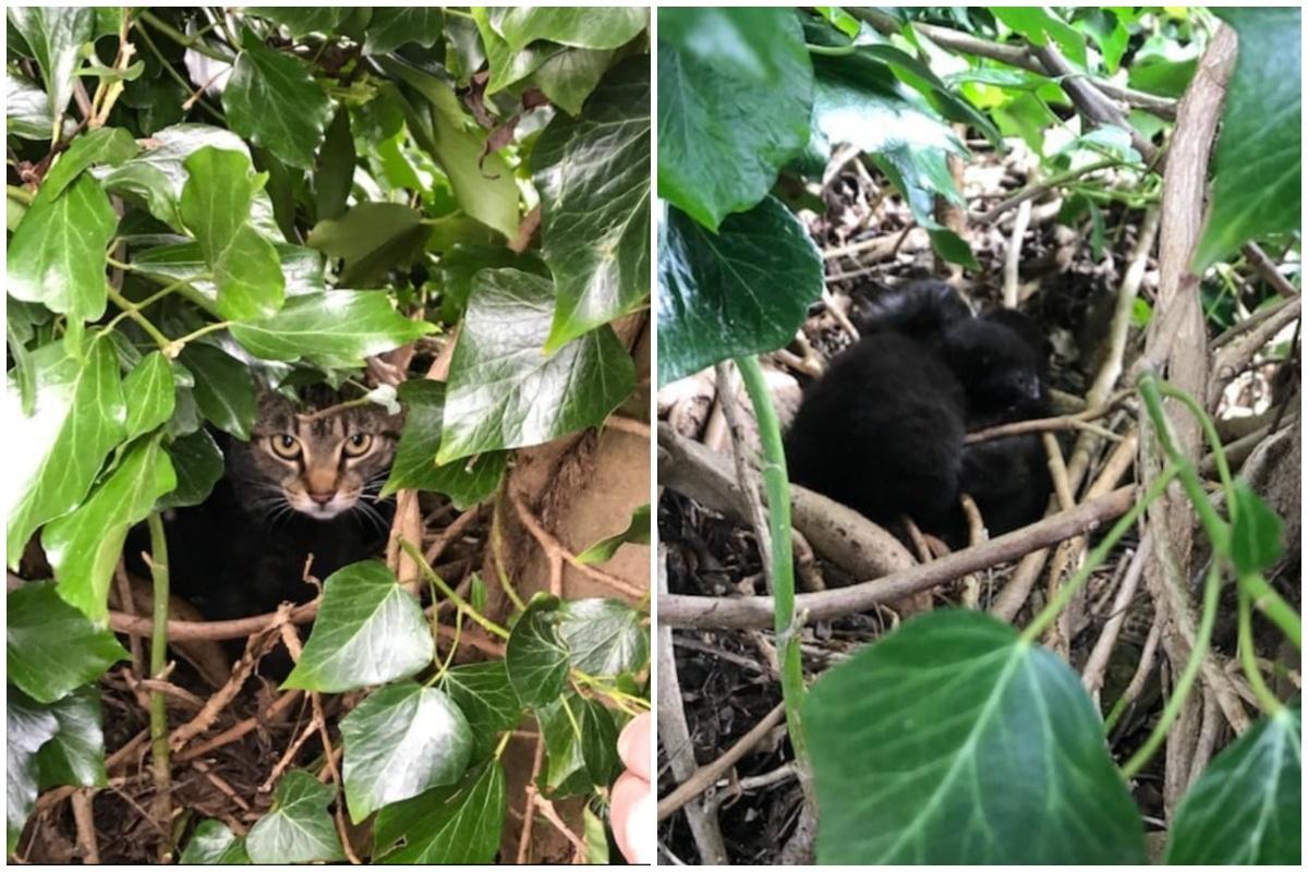 mamma gatta nido