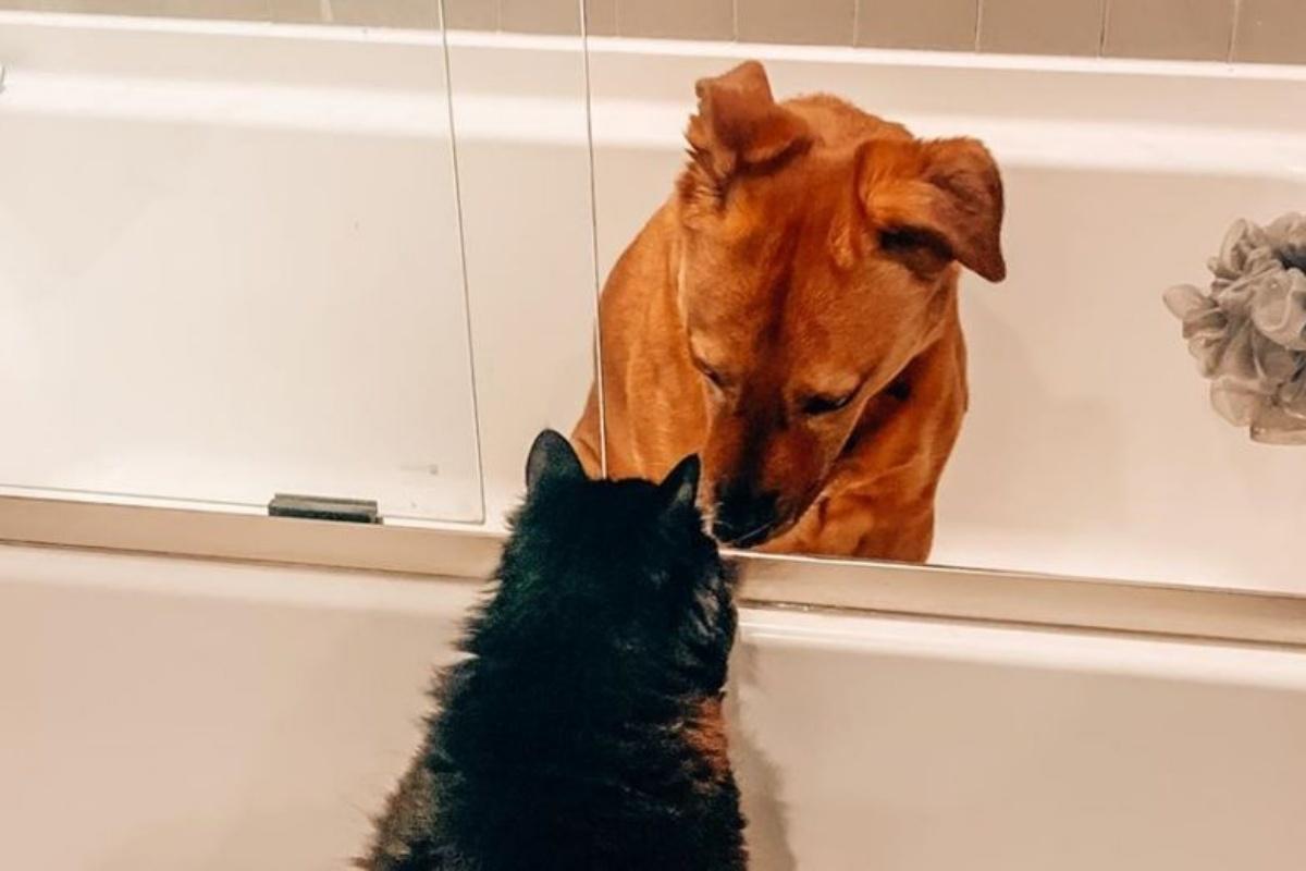 marvin e moose bagno