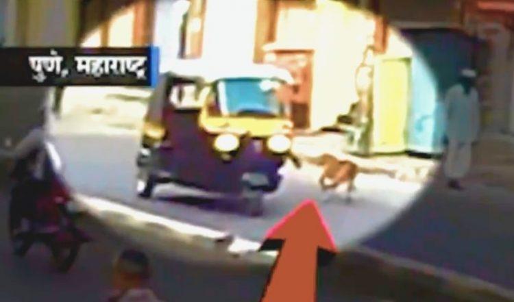 Cane maltrattato in strada