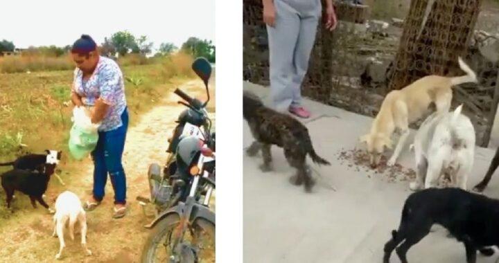 Salvare i cuccioli abbandonati
