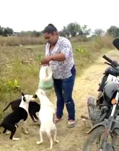 Nutrire i cani randagi