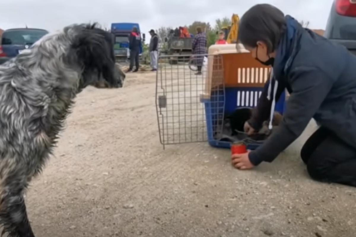 salvata mamma cane
