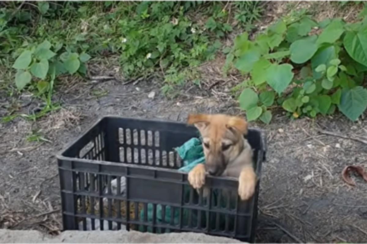 salvataggio cucciolo abbandonato