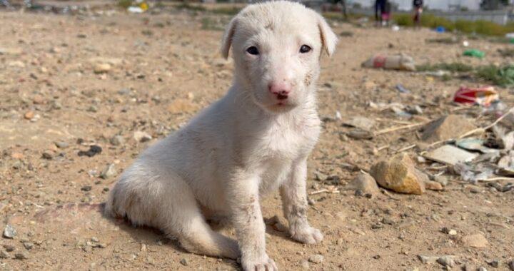 Smouse, il cane trovato con la coda tagliata e in gravi condizioni: la sua triste storia