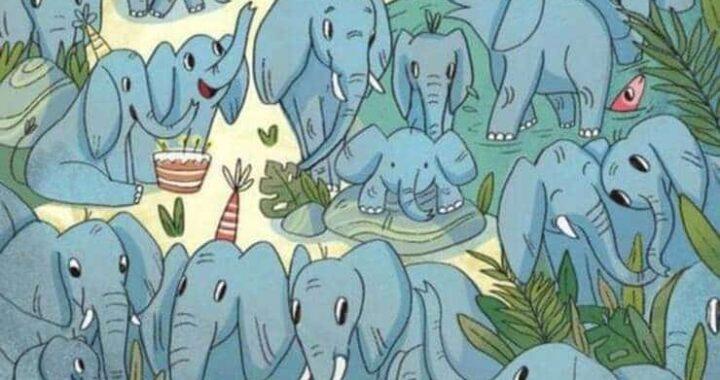 Trova l'orfano tra gli elefanti e sfida i tuoi amici a fare meglio