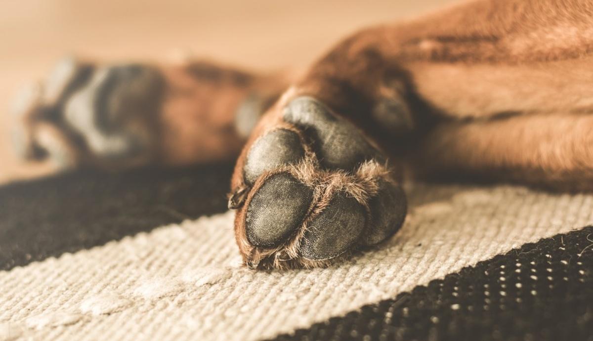 Uccisione di animali, rabbia nel Leccese