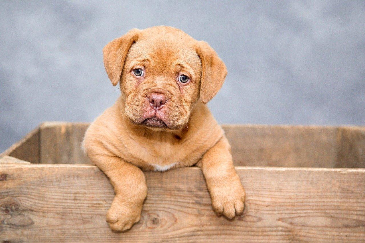 Legame tra cani e proprietari